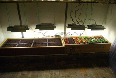 grow lights located in cellar